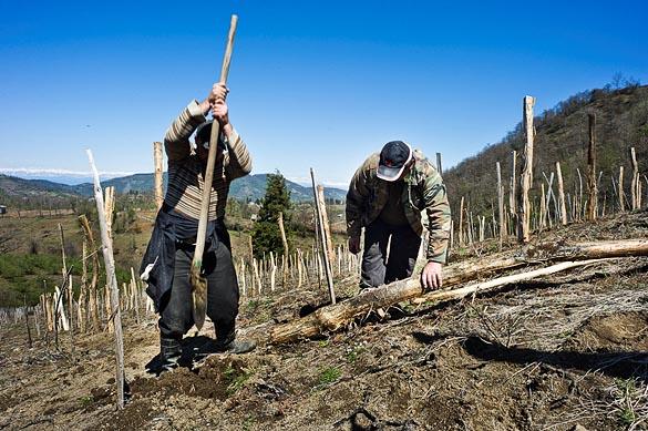 - Gruzija - Zurab Topuridze Winery - vinogradi -9653